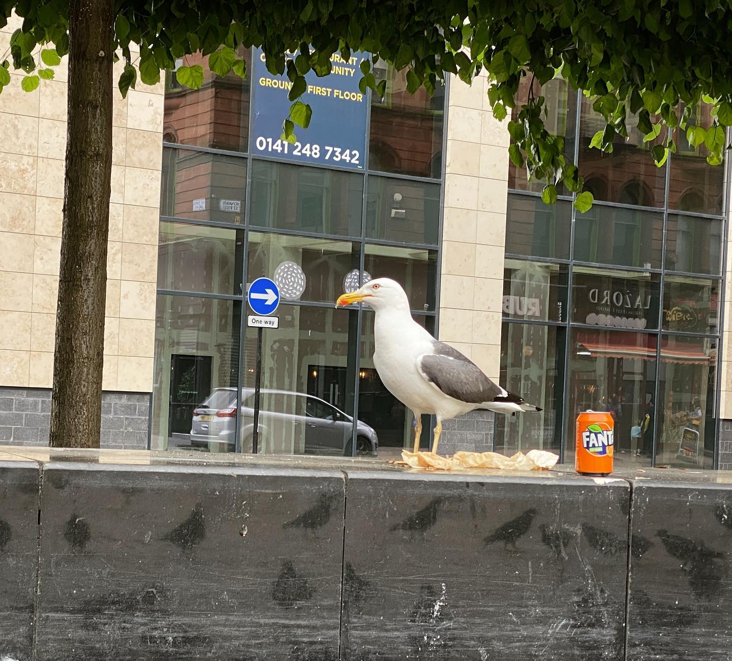 One Way Seagull